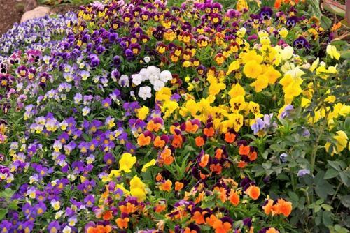 050449 Blumenpracht